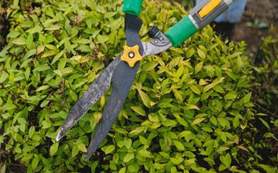 Jardinería octubre: labores de primavera